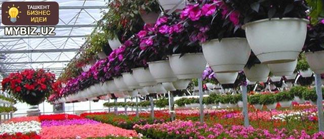 Как заработать на выращивании цветов в Ташкенте?